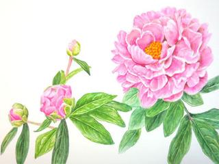 DSCN3927blog.jpg